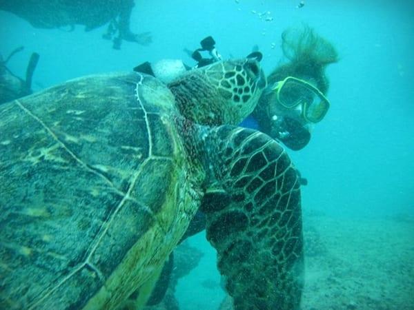 Tortuga Hawaii