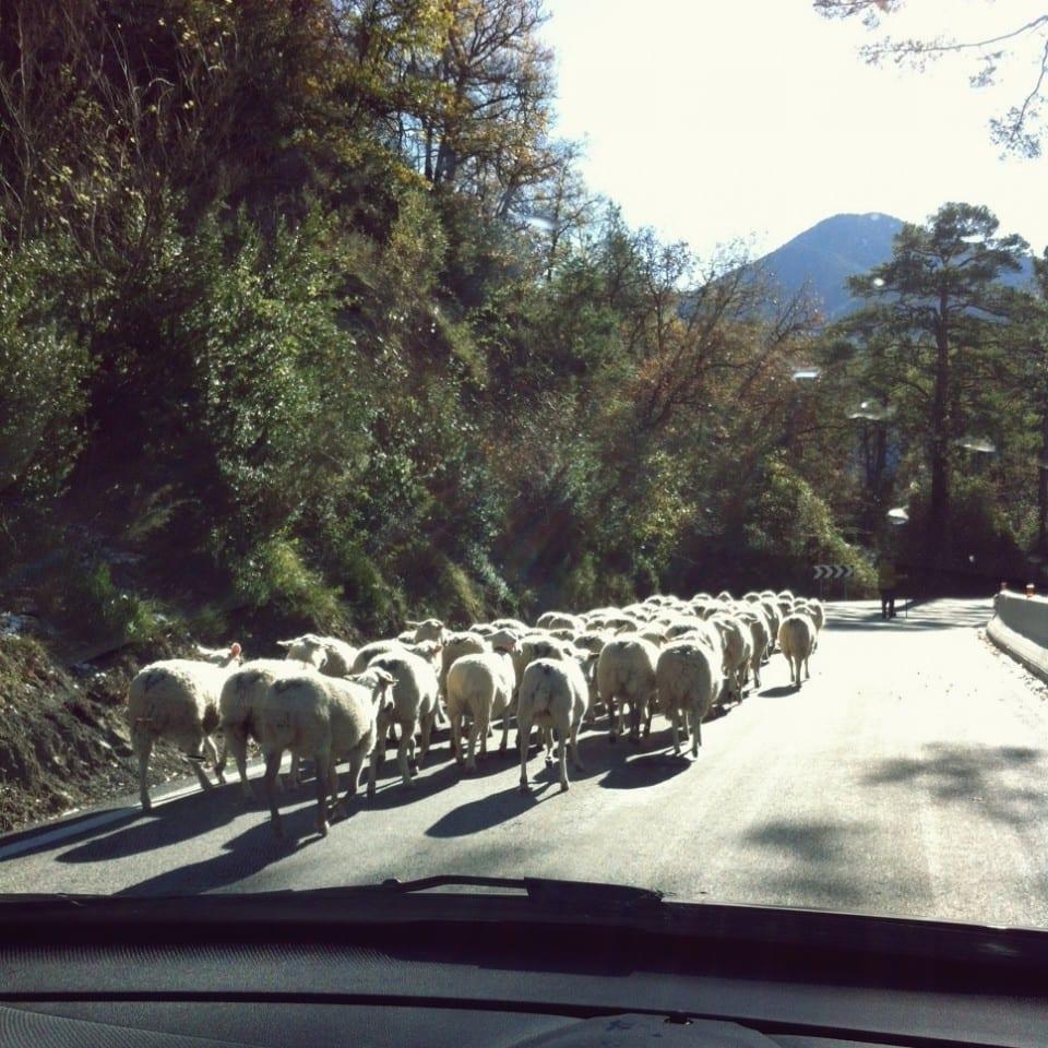 Caravana de ovejas, Huesca