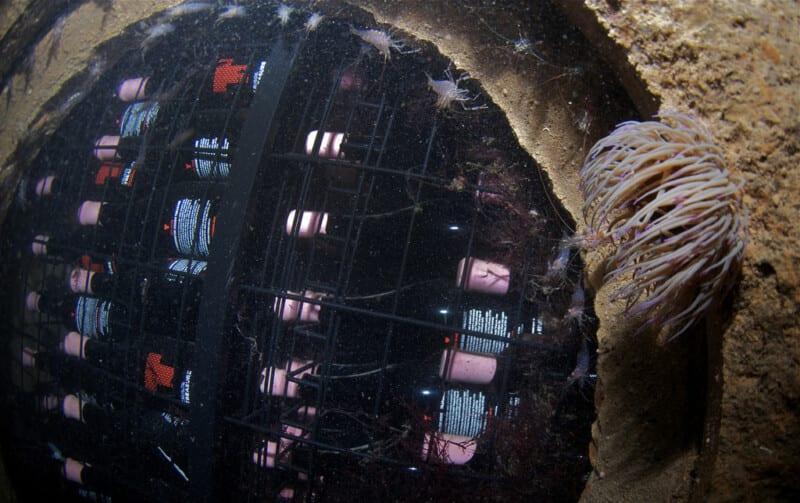 vino fondo del mar