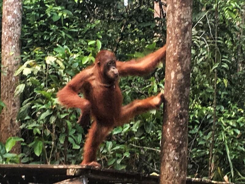 tour_orangutanes_borneo